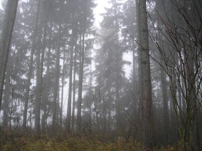 Tapeta: Svitavská podzimní mlha 68