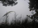 Tapeta Svitavská podzimní mlha 69