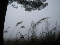 Tapeta Svitavská podzimní mlha 70
