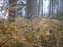 Tapeta Svitavská podzimní mlha 71
