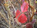 Tapeta Svitavská podzimní mlha 72