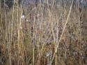 Tapeta Svitavská podzimní mlha 73