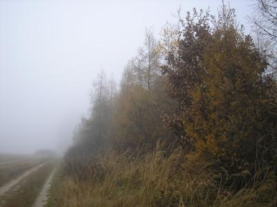 Tapeta: Svitavská podzimní mlha 75