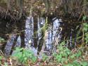 Tapeta Svitavská podzimní mlha 80