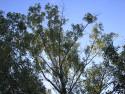 Tapeta Svitavy-strom ve větrolamu