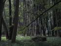 Tapeta Svitavy-Vodárenský les 01