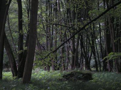 Tapeta: Svitavy-Vodárenský les 01