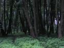 Tapeta Svitavy-Vodárenský les 02