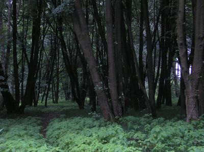 Tapeta: Svitavy-Vodárenský les 02
