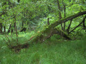 Tapeta Svitavy-Vodárenský les 04