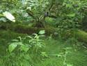 Tapeta Svitavy-Vodárenský les 07