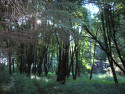 Tapeta Svitavy-Vodárenský les 08