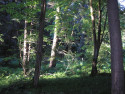 Tapeta Svitavy-Vodárenský les 09