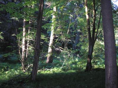 Tapeta: Svitavy-Vodárenský les 09