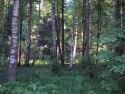 Tapeta Svitavy-Vodárenský les 10