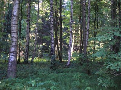 Tapeta: Svitavy-Vodárenský les 10