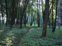 Tapeta Svitavy-Vodárenský les 11