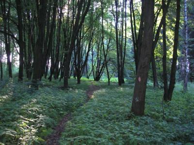 Tapeta: Svitavy-Vodárenský les 11