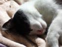 Tapeta Spící Dafi