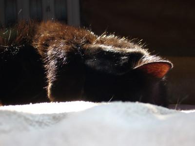 Tapeta: Spící Morty