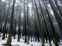 Tapeta Temný les