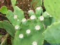 Tapeta The Cactus