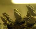 Tapeta The Lizard Community