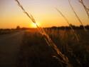 Tapeta tráva ve slunci