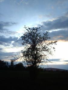 Tapeta: tree vs. sky
