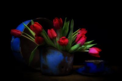 Tapeta: tulipány