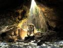 Tapeta Tygr v jeskyni