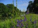 Tapeta U řeky v trávě