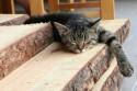 Tapeta únava kotěte
