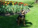 Tapeta Urs u květin