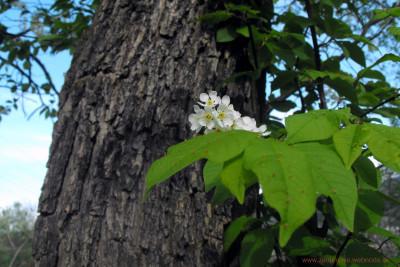 Tapeta: v kvete