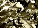 Tapeta v lese12
