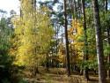 Tapeta V lese na Hracholuskách