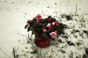 Tapeta Ve sněhu