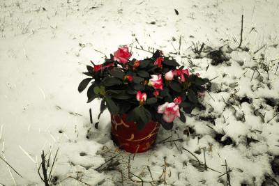 Tapeta: Ve sněhu