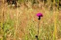Tapeta V trávě1