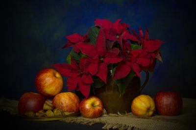 Tapeta: vánoční hvěda