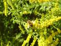 Tapeta včela :)