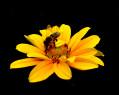 Tapeta Včelka na kytičce