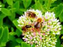 Tapeta Včely a čmelák