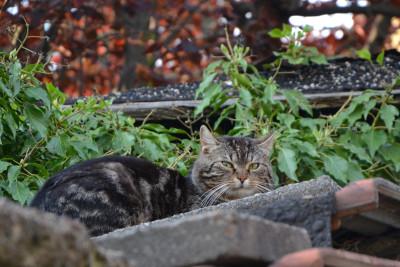 Tapeta: Venkovní kočka