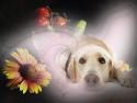 Tapeta Věrné psí oči