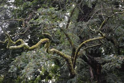 Tapeta: Větve