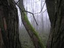 Tapeta Vodárenský les