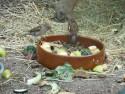 Tapeta Vrabci u snídaně