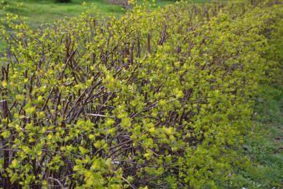 Tapeta: Všechno se zelená